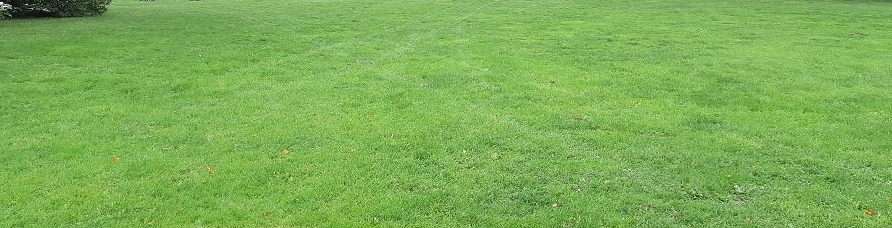 cum tundem iarba gazonul